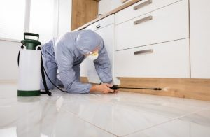 Reasons to hire a professional exterminator